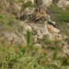 鯉魚擺尾 2012-02-11 Hiking - 頁 2 BiqRUZ6L