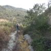 鯉魚擺尾 2012-02-11 Hiking - 頁 2 OJvjJas0