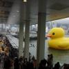 Rubber Duck Abi7oDlj