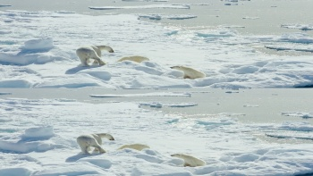 Imax To The Arctic (2012) 3D.1080p.Bluray.HOU.X264.ML-HDWing