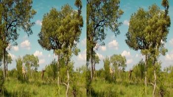 Wildlife South Africa (2011) 3D.1080p.BluRay.HSBS.x264.AC3-CHD