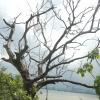 Hiking Tin Shui Wai - 頁 5 VvKYAD2H