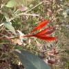 錦上荃灣 2013 February 23 AdeKiR0k