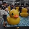 Rubber Duck Adg7wdDd