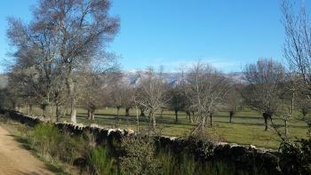 24/01/2016. Hoyo de Manzanares-Sierra de Hoyo de Manzanares. Parking del centro de hoyo: 8:00 OLujMSPz