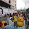 Rubber Duck AdthZy5x