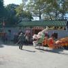 八鄉元崗村 眾聖宮重修開光典禮 Sdafdm6x