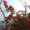 錦上荃灣 2013 February 23 AbrcieXG