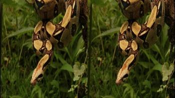 World Natural Heritage Panama (2012) 3D.1080p.Bluray.HSBS.X264.DL-zman