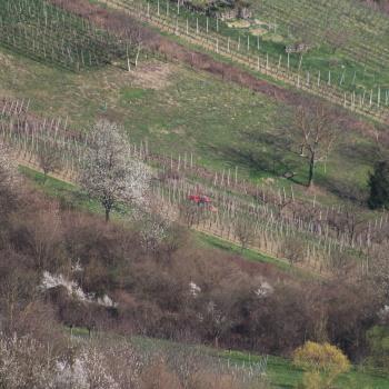 Radovi & poslovi u vinogradu - Page 6 At7v7hRk
