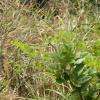 跳蛙 2012-01-07 AcyiHA6P