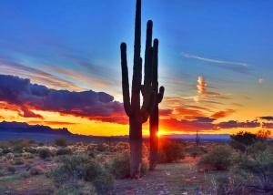 Saguaro cactus wallpapers