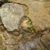 Hiking 2012 June 16 - 頁 4 Tz3n21ur