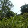 Hiking 2012 June 16 - 頁 4 BinziRKw