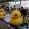 Rubber Duck AcoFeQGN