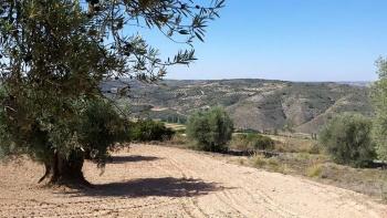 31/05/2015 - Propuestas gay-eteras... Morata-Tielmes-Arganda: 40km Ruta de las fuentes Cqp6JpLn