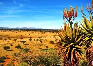 Kalahari desert wallpapers