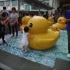 Rubber Duck AbosmF4B