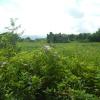 Hiking Tin Shui Wai - 頁 5 HyLjSLCw