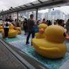 Rubber Duck AdukQMFj