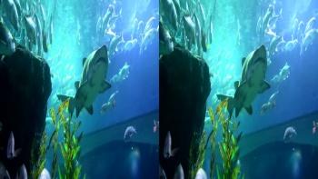 Diving In Paradise Shark Adventures In Thailand (2012) 3D.H-SBS.1080p.BluRay.x264-TUSAHD