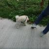 跳蛙 2012-01-07 Abrxkrjk