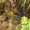 水長流 2012-09-22 AcwBwa3i