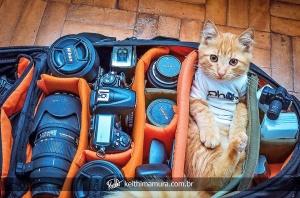 кот в фотосумке
