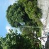 Hiking Tsuen Wan - 頁 2 DCdi3TFo