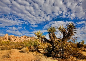Mojave desert wallpapers