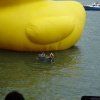 Rubber Duck AbsnEV7N