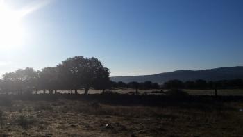 24/01/2016. Hoyo de Manzanares-Sierra de Hoyo de Manzanares. Parking del centro de hoyo: 8:00 HMZt20Uw