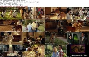 Beverly Hills Chihuahua 3 (2012) BluRay 720p BRRip mediafire links