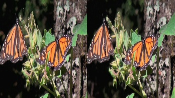 The Incredible Journey Of The Monarch Butterflies (2012) 1080p.BluRay.3D.H-SBS.x264.DTS-HDChina