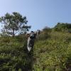 鯉魚擺尾 2012-02-11 Hiking - 頁 2 ZBRPLh0f