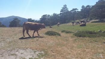 22/6/2016. Cercedilla , La Fuenfria , Sendero Cospe.  Gdog9Uyd
