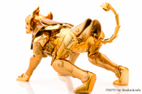 Leo Aiolia Gold Cloth ~Original Color Edition~ Aby37zMn
