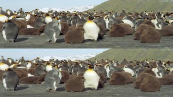 The Penguin King 3D (2012) 1080p.BluRay.Half-OU.x264-Public3D