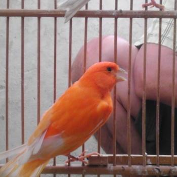 ... jpeg, Search Results for 'Cara Merawat Burung Kolibri Mabung.html