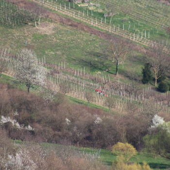 Radovi & poslovi u vinogradu - Page 6 5beY0MEI