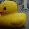 Rubber Duck Adn5dB31