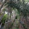 錦上荃灣 2013 February 23 AbscBGd2
