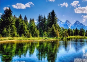 fir tree wallpapers