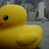 Rubber Duck AdvmalyY