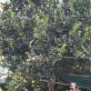 水長流 2012-09-22 AcikV9y4