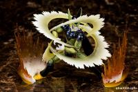 [Outras Coleções] Dragon Ball Z - Página 19 AblE0c0A