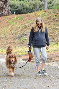 Amanda Seyfried - Walking Her Dog in Los Angeles - February 21st 2017