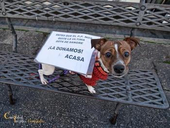 Nuestras Mascotas AaxEO8vF