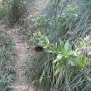 Hiking 2012 June 16 - 頁 4 HmkkVSOR