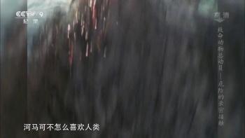 CCTV-国外出品-致命动物(全5集)/720P高清/国语内嵌中字